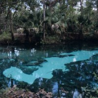 Florida_spring-